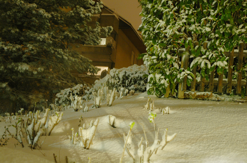 neige81.png